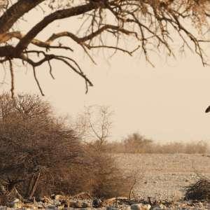 Foto tapeta Safari Žirafa