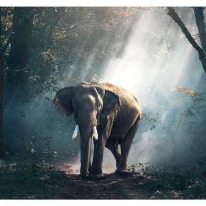 Foto tapeta Slon u Šumi