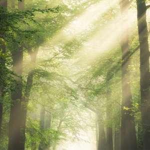 Foto tapeta Sunny Forest